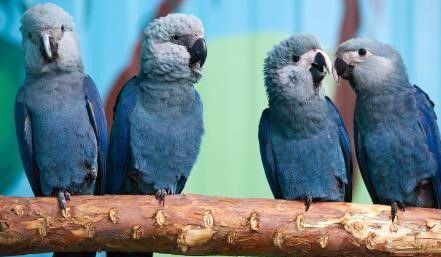Día de la Tierra: 4 animales que desaparecieron de América Latina (eluniversal.com)