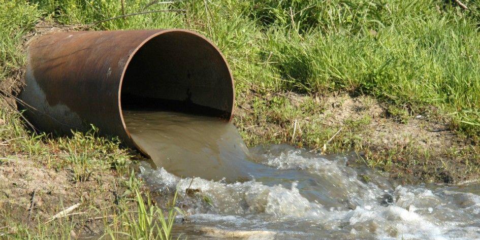 Sonora: resaltan importancia de humedal creado con agua reciclada de Sonora (20 Minutos)