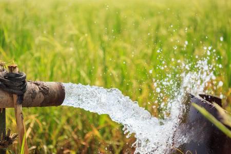 La lucha por el agua que ha confrontado a ciudadanos, gobierno y una cervecera en Baja California (Animal Político)