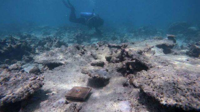 Australia: El cambio climático está dañando la capacidad de recuperación de la Gran Barrera de Coral (Tek Crispy)