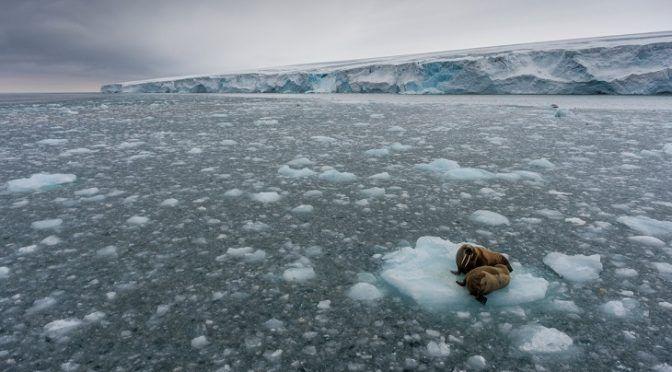 ¿Es posible proteger un tercio de los océanos del Planeta para 2030? (Ecoticias)