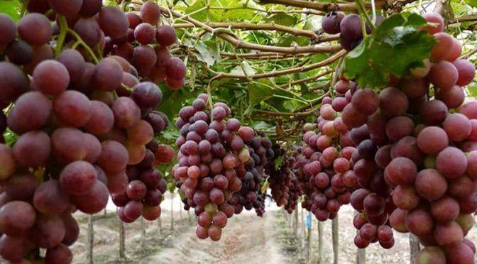 Baja California: podrían firmar vitivinicultores trato por agua (El Vigía)