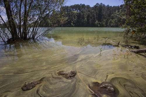 Michoacán: Aún hay tiempo para rescatar el lago Zirahuén: Investigador (La Jornada)