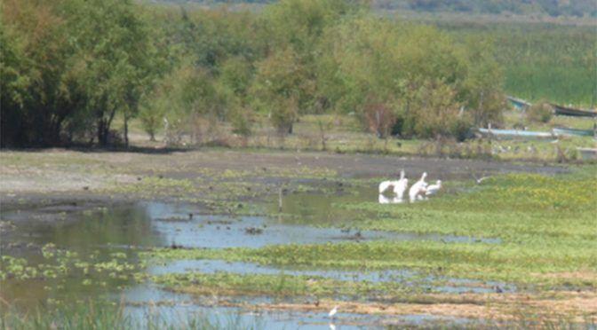 Michoacán: Trabajarán rescate del lago de Chapala (La Voz de Michoacán)