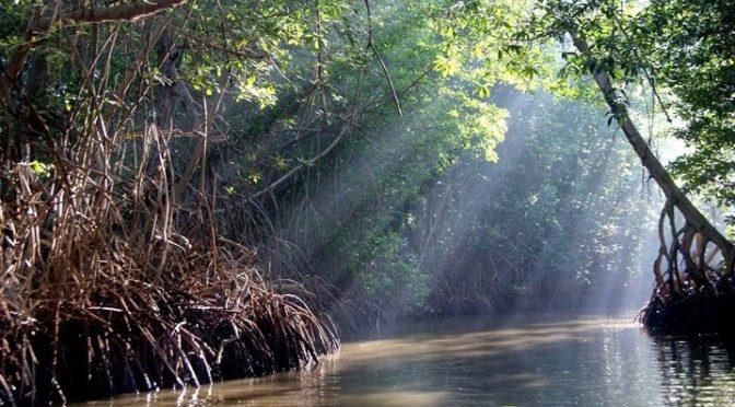 """Chiapas: Manglares la """"Encrucijada"""" en Chiapas (La Verdad)"""