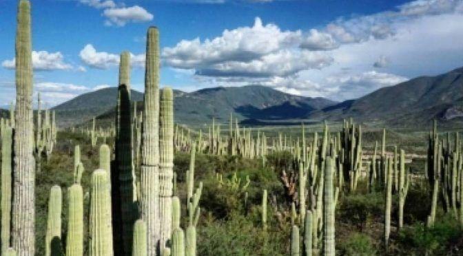 Puebla: Agua para siempre, agua para todos (El financiero)