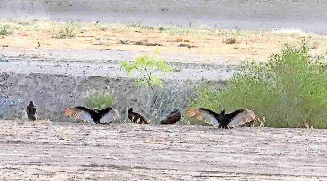 Chihuahua: Río Bravo, con poca agua (El Diario.mx)