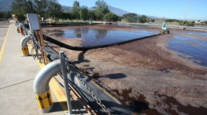 Jalisco: Olvidan protección de Paisaje Agavero; detectan contaminación en el agua (Informador)