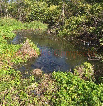 Campeche: Ecocidio en Santa Ágata II (Novedades Campeche)