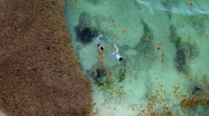 Yucatán: El Caribe mexicano se ahoga en sargazo (El Mañana)