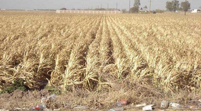 San Luis Potosí: Sufre SLP su peor sequía en 20 años (Pulso)