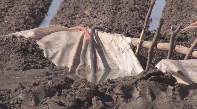 Cultivos fuera de ciclo podrían enfrentar problemas en el abasto de agua para riego (TVP)