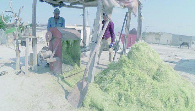 Coahuila: Atraviesan ejidatarios oleada de calor con agua contaminada (super channel 12)