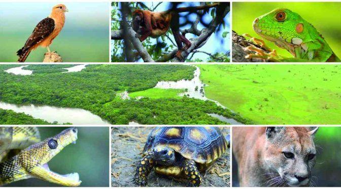 """Colombia: Gran parte de la naturaleza está """"perdida"""" y el resto en declive, dicen expertos (Sostenible)"""