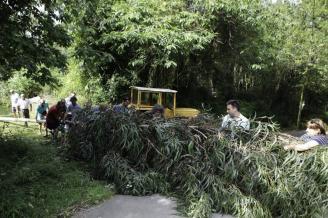 España: Los eucaliptos: una amenaza para los ríos y arroyos (La nueva España)