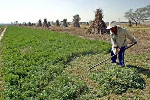 CDMX: Analiza Cinvestav de Saltillo uso de agua tratada para la agricultura (La Jornada)