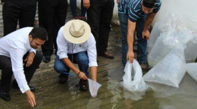 Nuevo León: Liberan 10 mil alevines de lobina negra en presa (24 horas)
