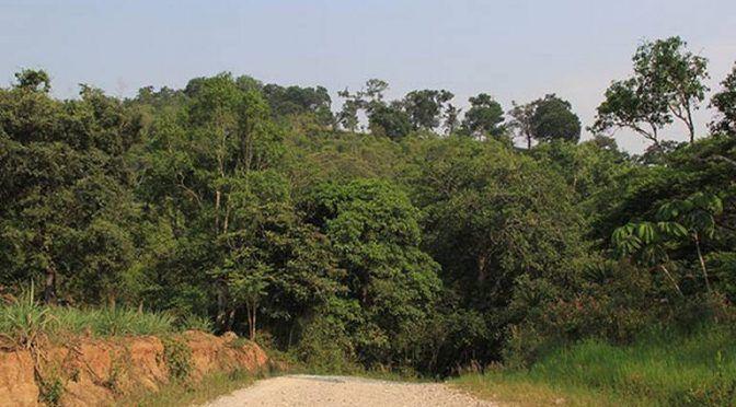 Veracruz: Vecinos de El Castillo impiden tala de pinos para evitar lotificación de predio (Diario de Xalapa)