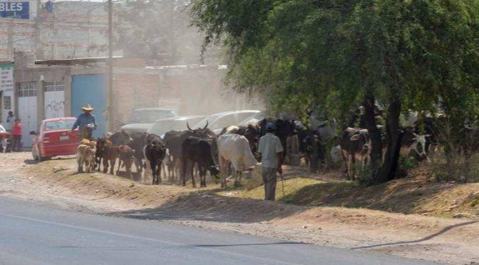 Queretaro: llevan en pipas agua al ganado tequisquiapense (El Sol de San Juan del Rio)