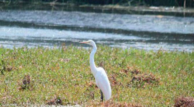 Tlaxcala: reducen su nivel de agua 16 presas (El Sol de Tlaxcala)