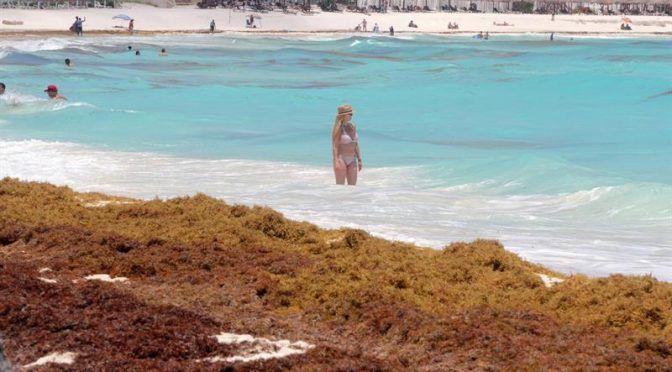 Yucatán: Sargazo, una amenaza mayor a lo que se piensa (Turquesa News)