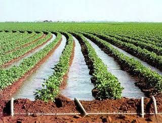 Michoacán: Tecnificadas en el estado, 10 mil hectáreas de riego: Sedrua (El Buho Michoacano)