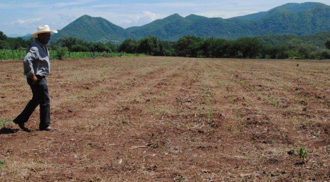 Veracruz: piden declarar desastre por sequía en 53 municipios (La Jornada)