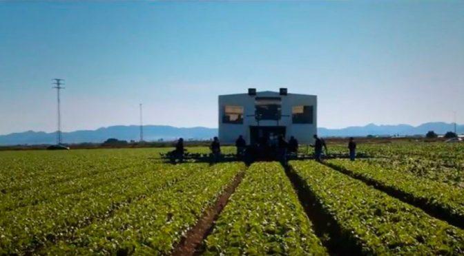 España: El almendro como alternativa viable ante la escasez de agua (La opinión de murcia)