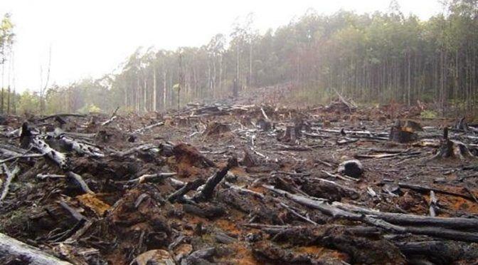 ONU: Bosques del Planeta en peligro por cambio climático (HRN)