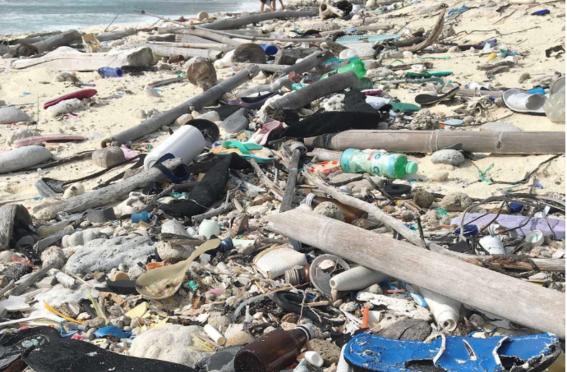 Australia: Así afecta el plástico de los cepillos dientes al mar (CC News)