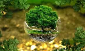 CDMX: Alteradas tres cuartas partes del medio ambiente terrestre: estudio (La Jornada)
