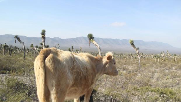 Coahuila: Resienten ejidos la sequía…y no llueve (El Diario de Coahuila)