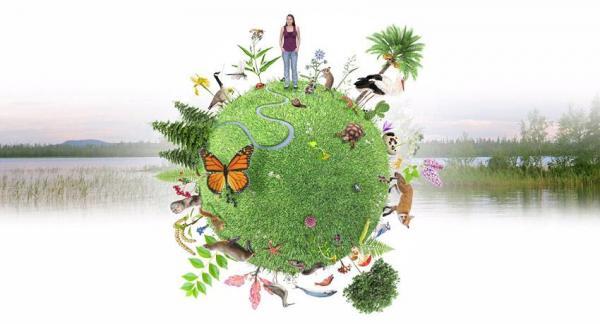 Pérdida de Biodiversidad: Causas y Efectos