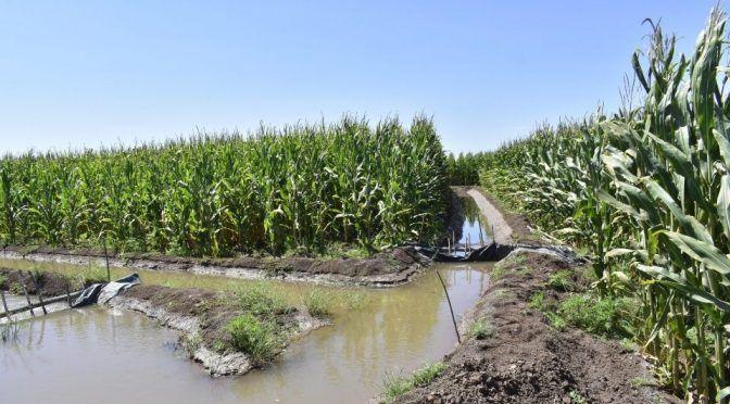 Sinaloa: Expertos: Problema por agua de riego es por culpa del productor (Debate)