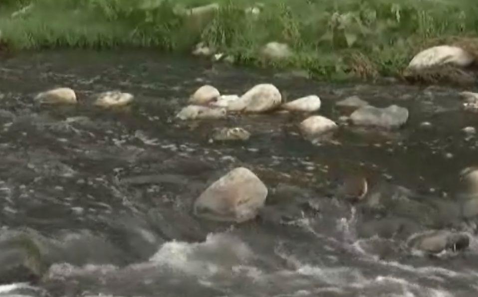 Nuevo León: Contaminación mata a miles de peces en el río Pesquería (Milenio)