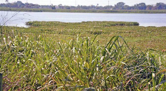 Tabasco: Laguna El Negro, en el olvido (El Heraldo de Tabasco)