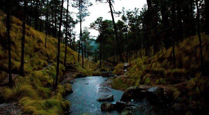 Puebla: Propone Congreso reforestación del Parque Izta-Popo (única)