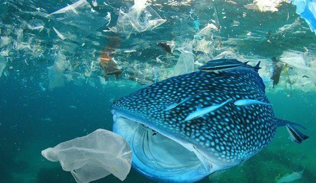 Estos microbios que se alimentan de plástico podrían combatir la contaminación marina (TekCrispy)
