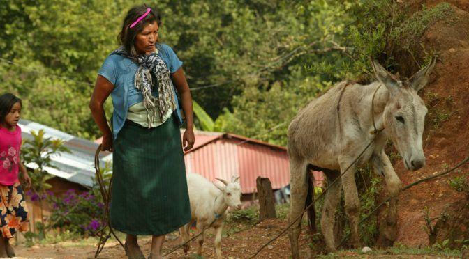 Oaxaca: Sin agua potbale 15.76 % de viviendas (El Imparcial)