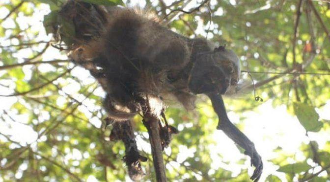 Monos mueren por falta de lluvia en Veracruz (Telediario)