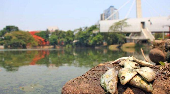 Tabasco: Mueren peces de lagunas por sequía y contaminación (El Heraldo de Tabasco)