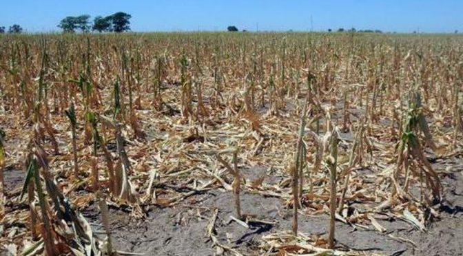 Tamaulipas: Campañas detienen plan emergente contra sequía (Milenio)
