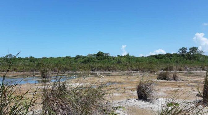 Quintana Roo: clima ocasiona que se sequen cuerpos de agua (La Verdad Noticias)