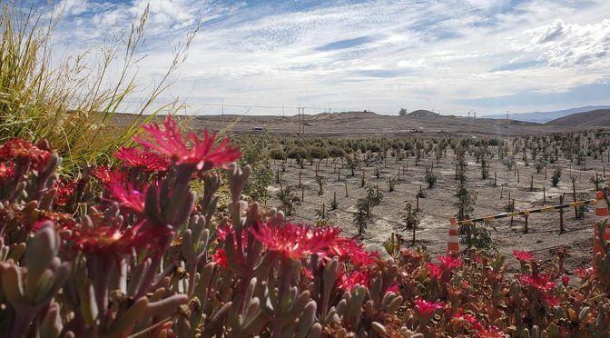 Chile: Proyecto busca reforestar el Desierto de Atacama para contrarrestar el calentamiento global (Diario Uchile)