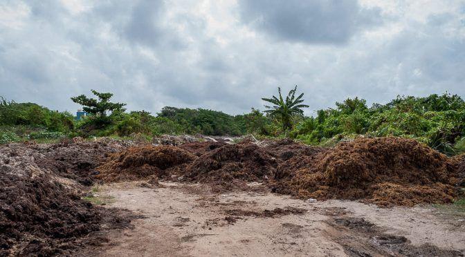 Quintana Roo: La amenaza de los tiraderos clandestinos de sargazo (veme.digital)