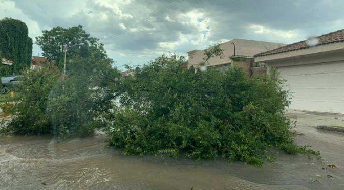 Torrencial lluvia causa afectaciones en Saltillo, Coahuila (unoTV)