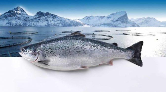 El reto de mantener un océano limpio y productivo para satisfacer la demanda mundial de alimentos (Interempresas)