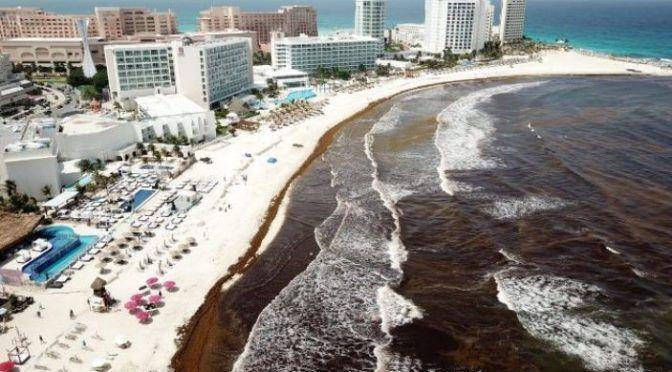 México: El tema del sargazo sí es grave, modificaría el ecosistema marino (La Crónica)