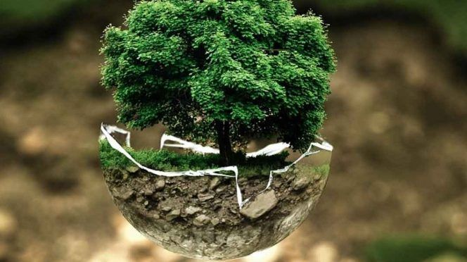 CDMX: Día Mundial del Arból; es momento de plantar uno (Excelsior)