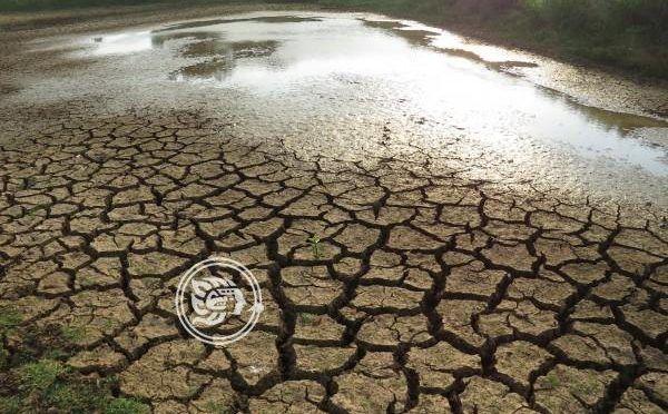 Veracruz: Estiaje provoca sequía en lagunas al sur y reducción de especies (La opinión de poza rica)